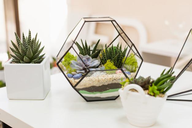 Plantas em apartamento.