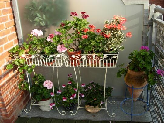 Plantas em casa - Flores.