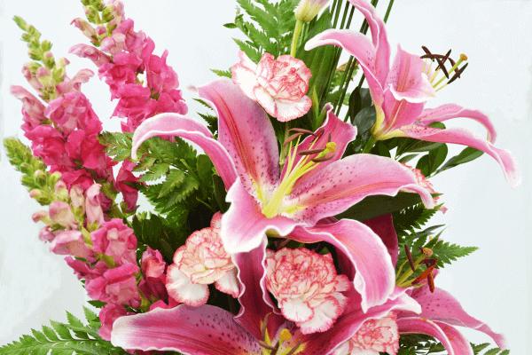 Lírio - A mais bela flor da realeza.