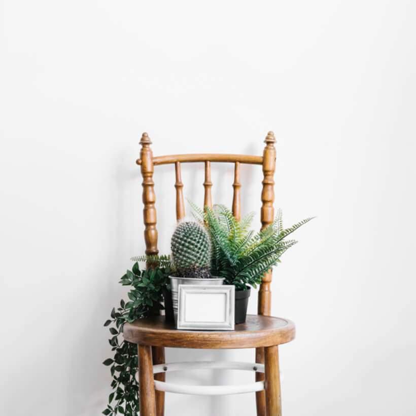 Cadeira com suculentas e cactos no banheiro.
